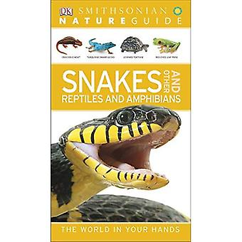 Snakes and Other Reptiles and Amphibians (Smithsonian Nature Guides)