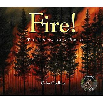 Fire!: The Renewal of a Forest (Information Storybooks)