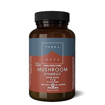 Terranova Mushroom Synergy Super-Blend Poudre 40g (T2367)