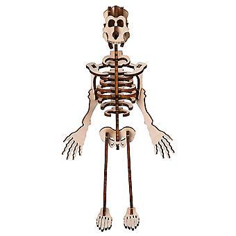 DIY Human Bone Model Intelligence Uddannelse Building Block Human Bone Model Blocks Legetøj