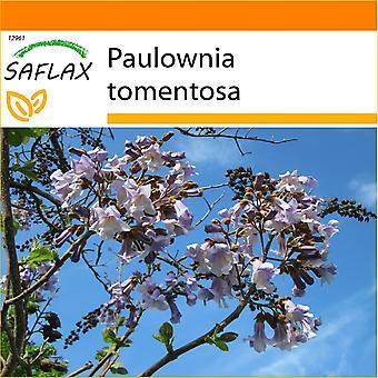 Saflax - jardin dans le sac - 200 graines - Princess Tree - Arbre impérial - Albero della principessa - Paulonia - Blauglockenbaum