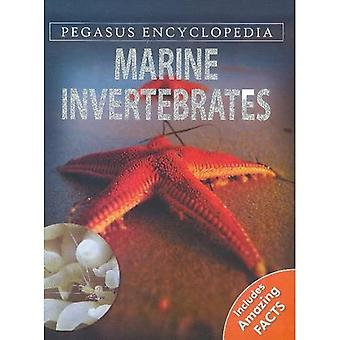 MARINE INVERTEBRATESSEA WORLD