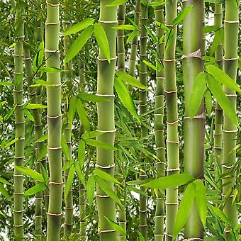 Jungle Tropical Rainforest Wallpaper Trees Flowers Floral Bamboo Green Vinyl