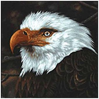 Mogwai - Hawk Is Howling [CD] Usa import