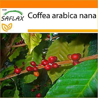 Saflax - jardim no saco - 8 sementes - café anão - Caféier d'Arabie - Pianta di caffè - Planta del café - Zwergkaffee-Strauch