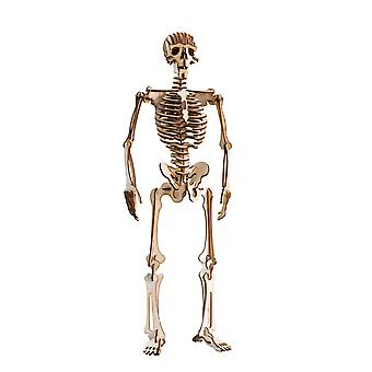 Crafts - human skeleton - raw wood model kit