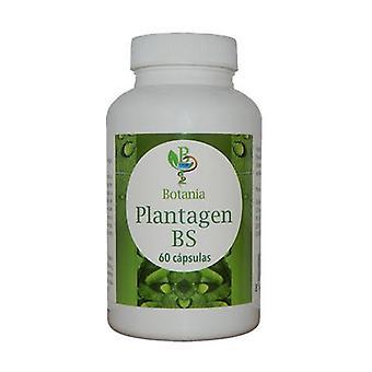 Plantagen BS (Boswellia) 60 kapselia