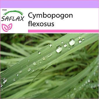 Saflax - 50 zaden - citroengras - citroengras de l'Inde - Citronella - Pasto limón - Zitronengras