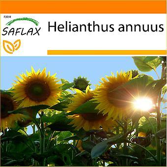Saflax - Garten in der Tasche - 20 Samen - Sonnenblume Titan - Tournesol Titan - Girasole Titan - Girasol Titan - Sonnenblume Titan