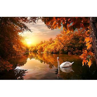 Muurmuurschildering Witte Zwaan op de Vijver van de Herfst