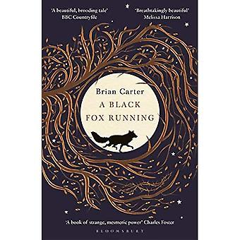 Een zwarte Fox lopend