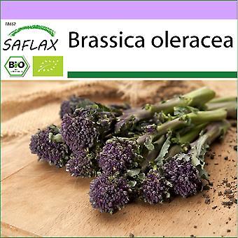 Saflax - 150 graines - Bio - Brocoli - Early Purple - BIO - Brocoli - Early purple - BIO - Broccolo - Early Purple - Ecol'oco - Brôcoli - Morado Temprano - BIO - Broccoli - Early Purple