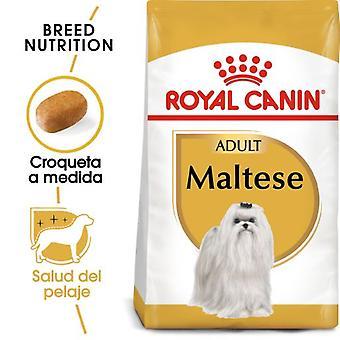 Royal Canin Maltes Voksen Mad Race (Hunde, Hundemad, Tørfoder)