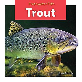 Trout (Freshwater Fish)
