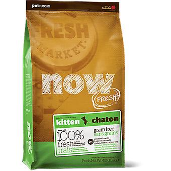 Now Kitten Grain Free (cats, food, animal feed)