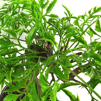 45cm künstliche twisted Ficus Bonsai Baum