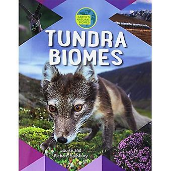 Tundra biome (biomi naturale della terra)