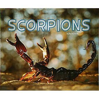 Schorpioenen (Pebble Plus: Meet woestijn dieren)
