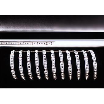 LED strip flexibele 2835-120-24V 100W 6000K 15m B 10mm shortenable niet dimbaar wit IP20