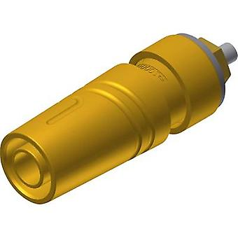 "SKS הירשמן SKS 2640 LK Au שקע שקע בטיחות שקעים, הפין האנכי אנכית קוטר: 4 מ""מ צהוב 1 pc (עם)"