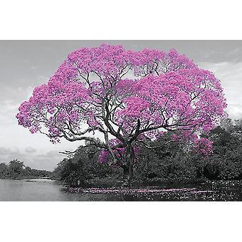 Puu kukka juliste kukkiva puu.