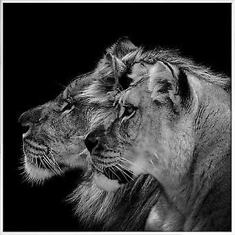 JUNIQE Print - Lion Duo Profil af Lothare Dambreville - Lion Plakat i grå og sort