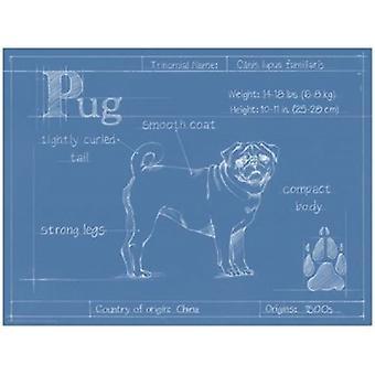 Blåkopi Pug Poster trykk av Ethan Harper (16 x 12)
