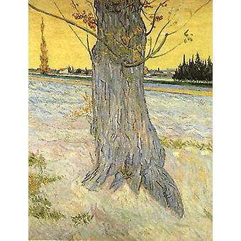 Vanhan Yew-puun runko, Vincent Van Gogh, 50x40cm