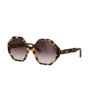 Chloe Willow CE750S 845 Havana/Brown Gradient Sunglasses
