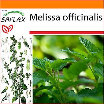 Saflax - Garten in der Tasche - 150 Samen - Zitronen-Melisse - Melisse Officinale - Erba Limoncina - Melisa u Hoja de Limón - Zitronen - Melisse