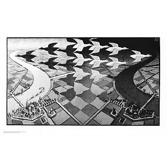 Dia e noite Poster Print by MC Escher (34 x 22)