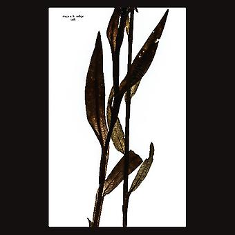 Sult [CD] USA import