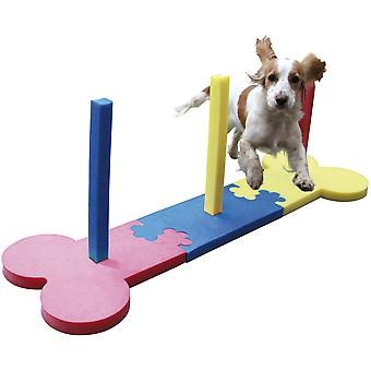 Slalom de agilidade de pequeno cão de jacarandá