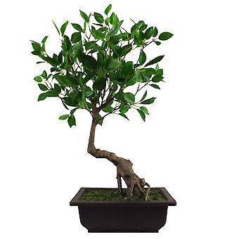 50cm Artificial Ficus Bonsai Tree