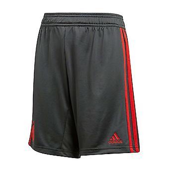 2018-2019 Bayern Munich Adidas Training Shorts (Utility Ivy)