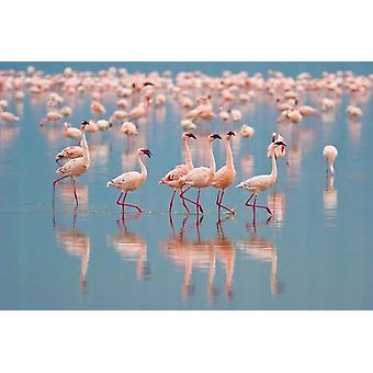 Bakgrunn mural Flamingos