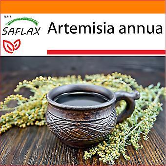 Saflax - Jardim no Saco - 250 sementes - Sweet Wormwood Qing Hao - Armoise annuelle Qing Hao - Artemisia annuale Qing Hao - Ajenjo dulce Qing Hao - Chinesischer Beifuß Qing Hao