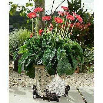 Potty Feet Cocker Spaniel Themed Plant Pot Feet in Antique Bronze Color - 3pc