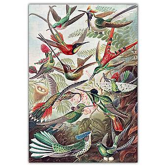 Haeckels Hummingbirds Jigsaw Puzzle #6730