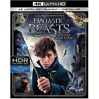 Fantastic Beasts & où les trouver importation USA [Blu-ray]