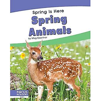 Spring Is Here: Spring Animals