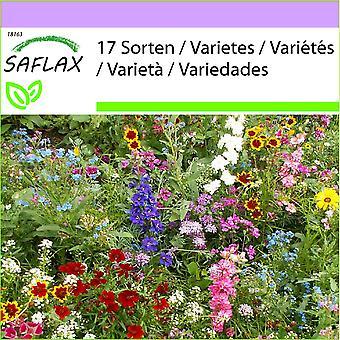 Saflax - 1000 frø - Sun tilbeder Mix - Adorateurs du soleil - Adoratori del sole - Adoradores del sol - Sonnenanbeter