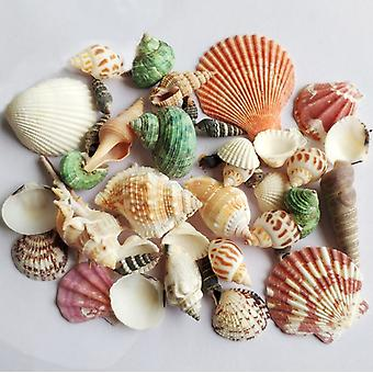 Akvarium dekoration skal och conch