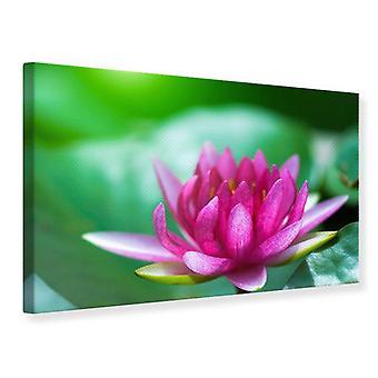 Canvas tulostaa Lotus, vaaleanpunainen