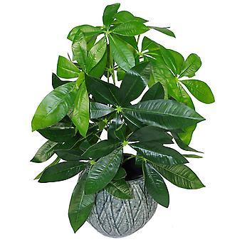 50cm Artificial Money Tree Plant