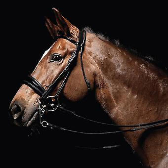 Caldene Bridle Double Dressage Patent Padded With Rubber Lined Reins