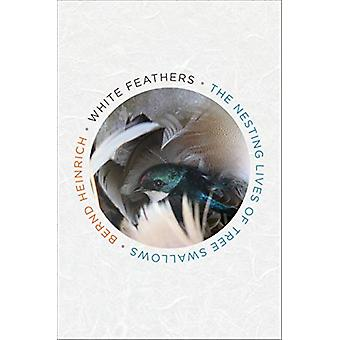 White Feathers - The Nesting Lives of Tree Swallows by Bernd Heinrich