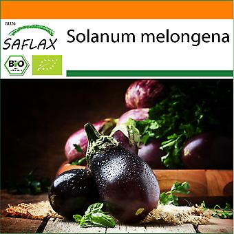 Saflax - Garden in the Bag - 25 seeds - Organic - Aubergine - Black Beauty - BIO - Aubergine - Beauté noire - BIO - Melanzana - Black Beauty - Ecológico - Berenjena - Belleza Negra - BIO - Aubergine - Black Beauty