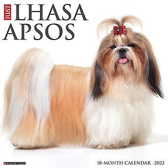 Just Lhasa Apsos 2022 Wall Calendar Dog Breed by Willow Creek Press