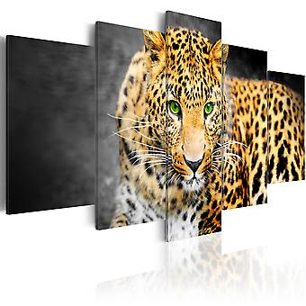 Tavla - Green-eyed leopard